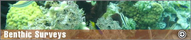 Benthic Surveys - Seagrass, Oyster Bed, Macroinvertabrates, Hard Bottom