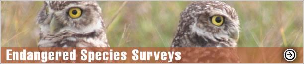 Endangered Species Surveys - Burrowing Owl Survey, Gopher Tortoise Survey, Scrub Jay Survey, Broward County MPP, Volusia County MPP, Dune Restoration, Sea Turtle Protection